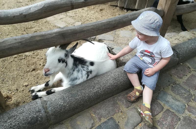 caprette zoo berlino