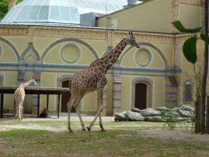 Giraffe Zoo Berlin