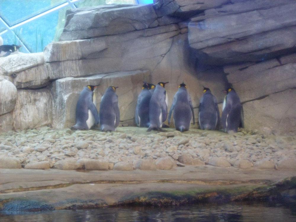 Pinguini Zoologischer Garten