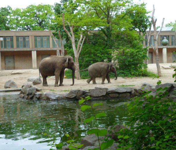 Zoologischer Garten - Zoo di Berlino